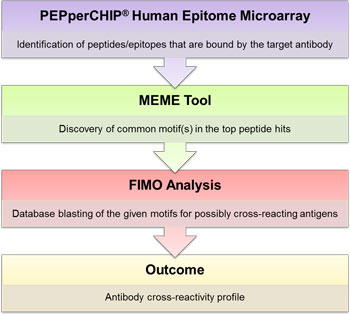 Antibody Cross-Reactivity Profiling with the PEPperCHIP® Human Epitome Microarray